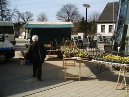 Gärtnerei Willeke Hilkenbach, Marktstand, Pflanzenverkauf